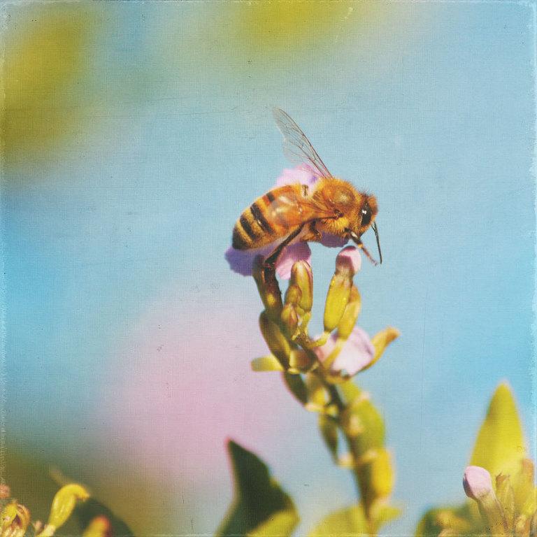Duranta & Bee