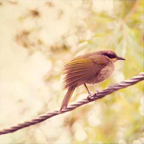 Bird On A Wire - After processing with digital textures