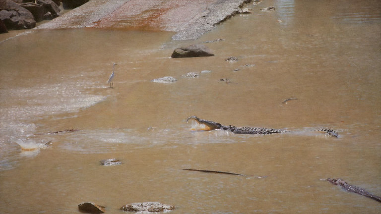 Crocodiles and Egret Fishing at Cahill's Crossing