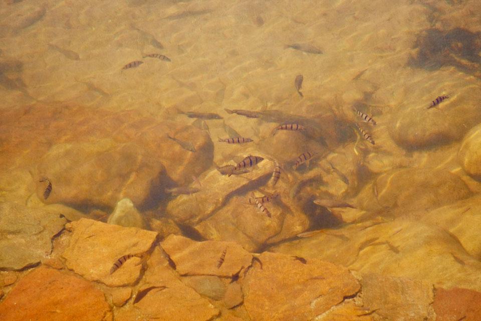 Tiny Fish