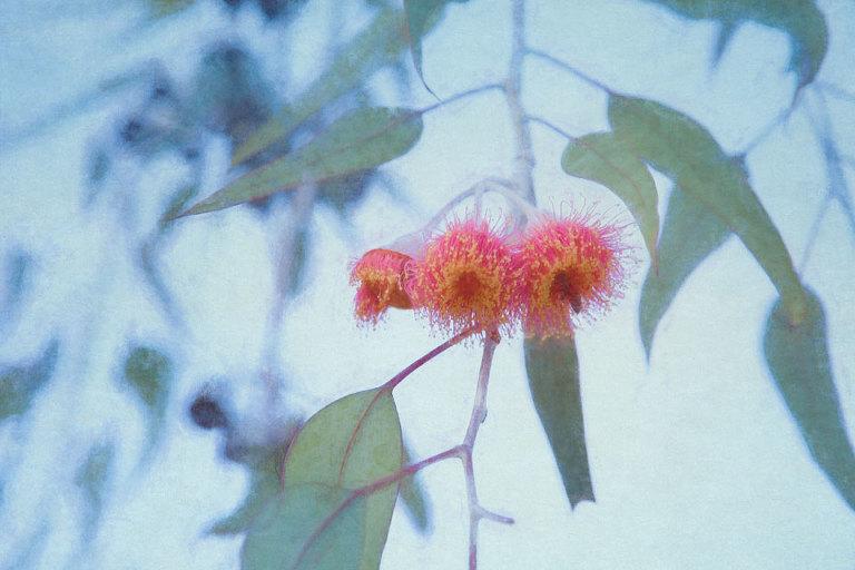 Bee & Blossom