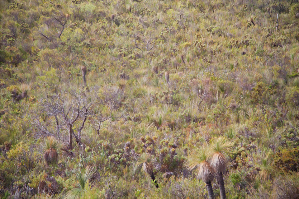 Densely textured view of a hillside covered in grass trees and other plants